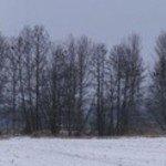 14.02.2012 Kormorane Schmogrow
